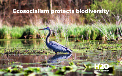 UN biodiversity report underscores need for an expanded Green New Deal