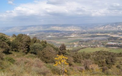 US Should Resist Israel's Annexation of the Jordan Valley with BDS